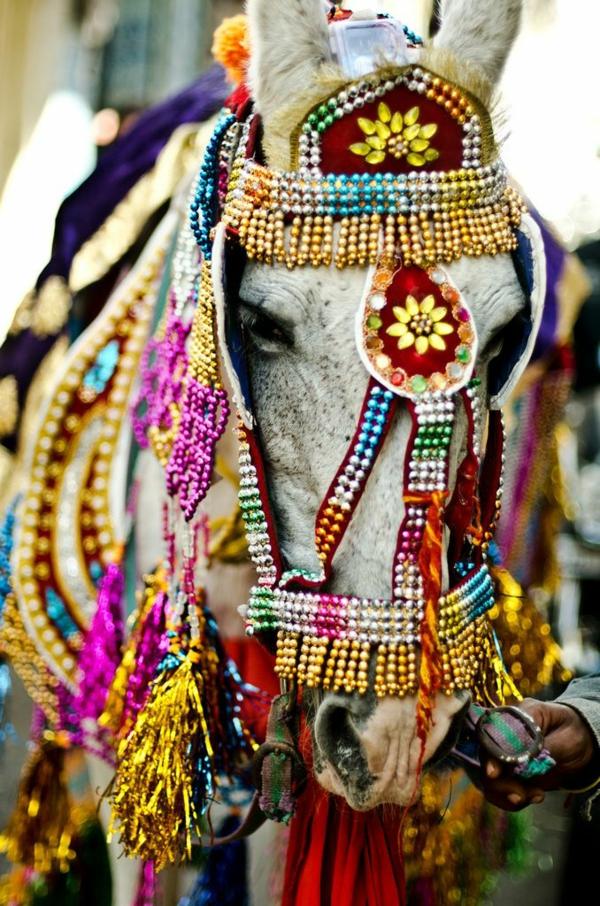 reise nach indien indische kultur indische hochzeit pferd