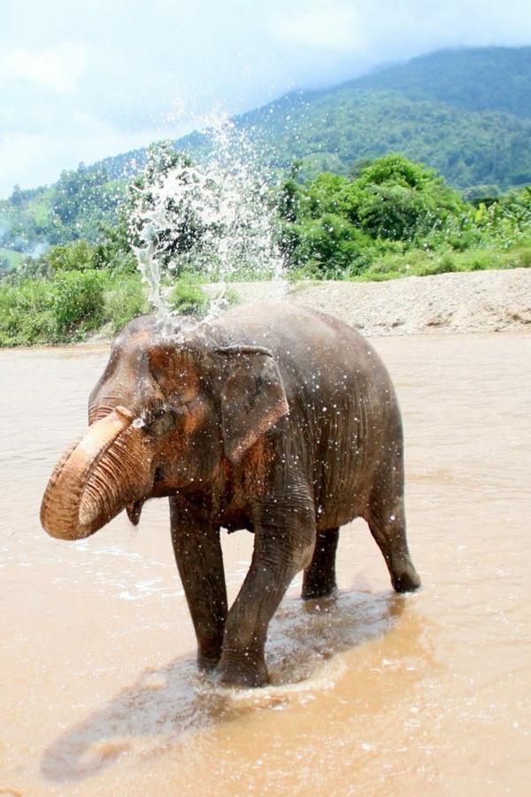 reisen nach thailand rundreise Chiang Mai park elefant