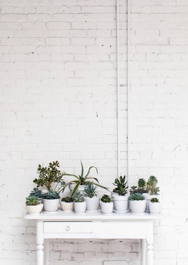 schöne zimmerpflanzen bilder birkenfeige sukkulenten