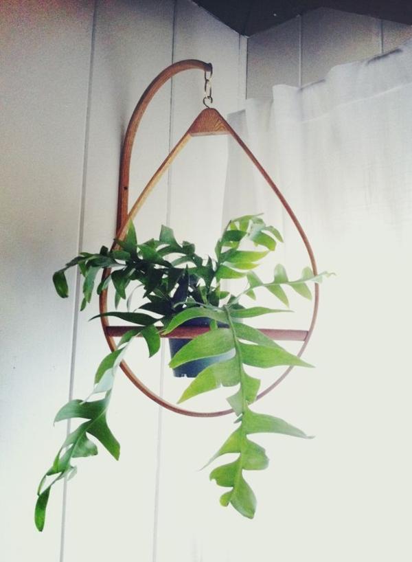 schöne zimmerpflanzen bilder blumenampel