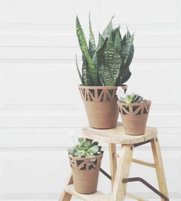 schöne zimmerpflanzen bilder bogenhanf sukkulenten