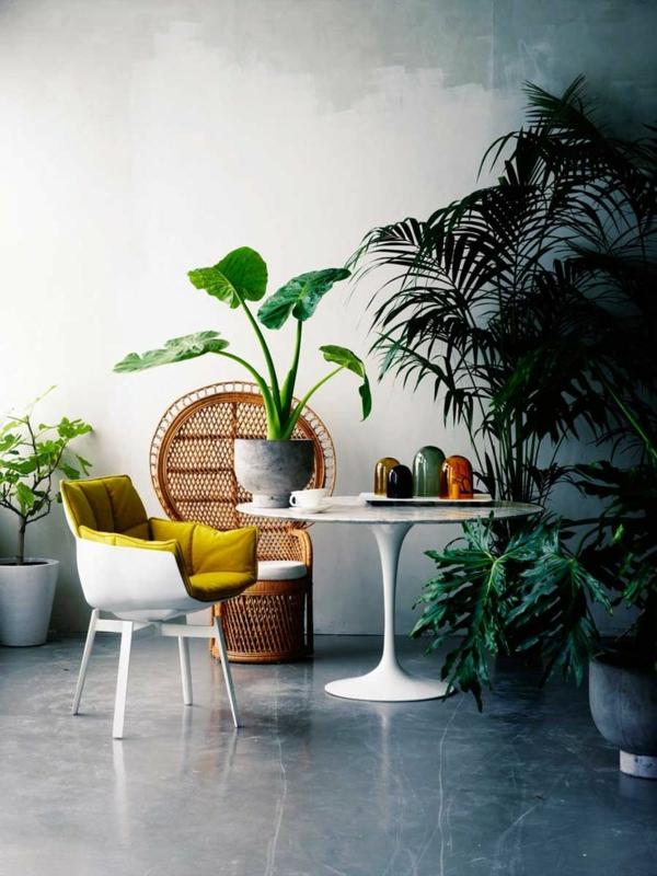 schöne zimmerpflanzen bilder fensterblatt palmen bilder