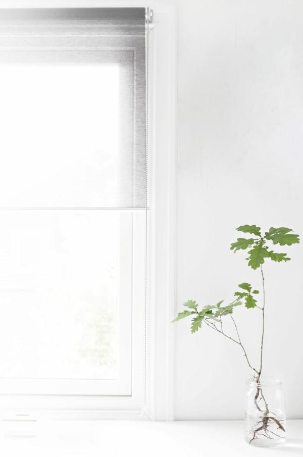 schöne zimmerpflanzen bilder jungpflanze eintopfen