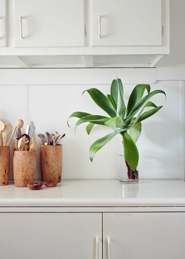 schöne zimmerpflanzen bilder jungpflanze