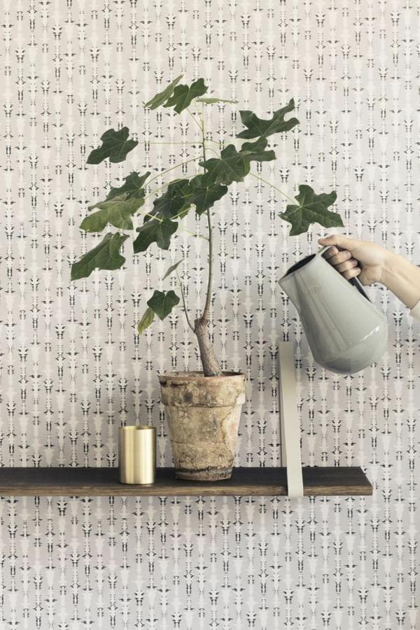 schöne zimmerpflanzen pflegeleicht bilder pflege gießkanne