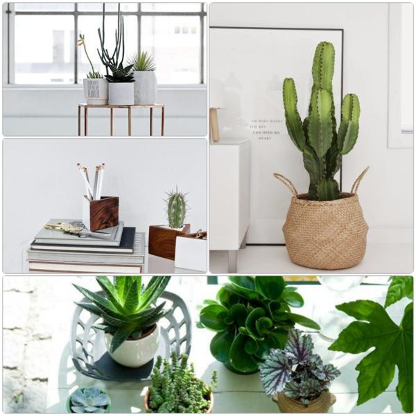 schöne-zimmerpflanzen-bilder-pflegeleichte-zimmerpflanzen