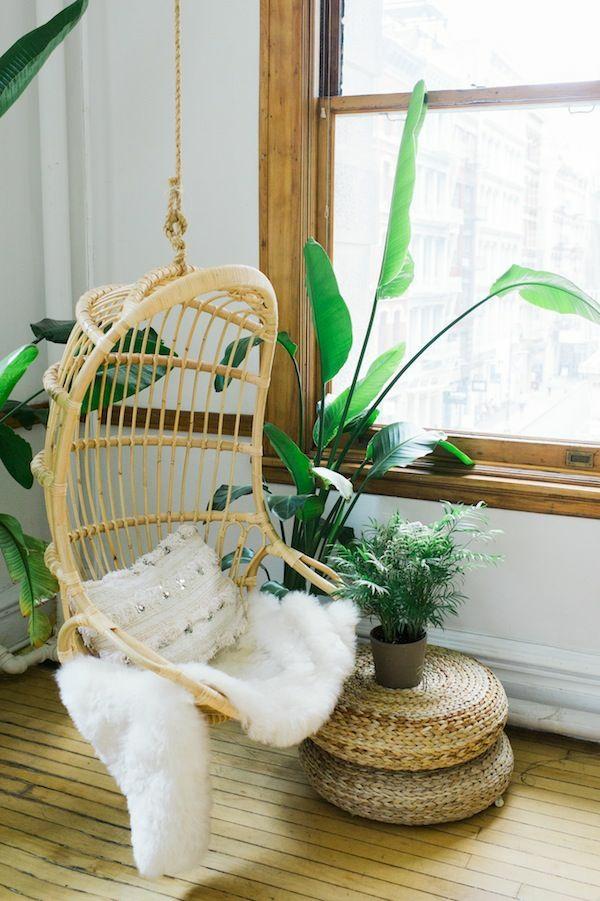 schöne zimmerpflanzen pflegeleicht bilder rattanmöbel hängekorbsessel