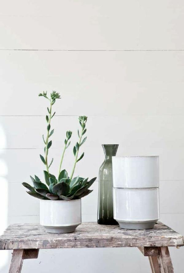 schöne zimmerpflanzen pflegeleicht bilder sukkulenten