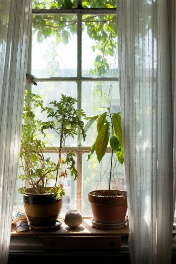schöne zimmerpflanzen topfpflanzen am fenster