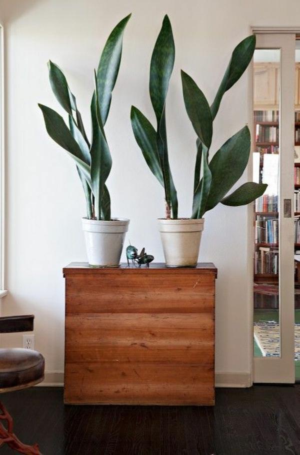 schöne zimmerpflanzen palmen bilder topfpflanzen groß