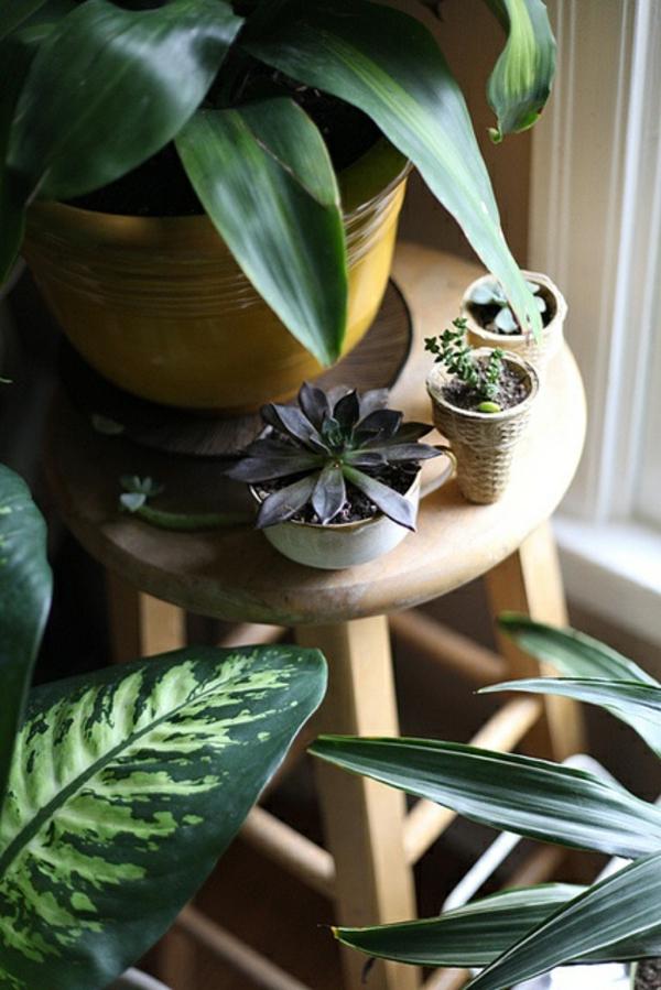 bildergalerie  schöne zimmerpflanzen topfpflanzen sukkulenten