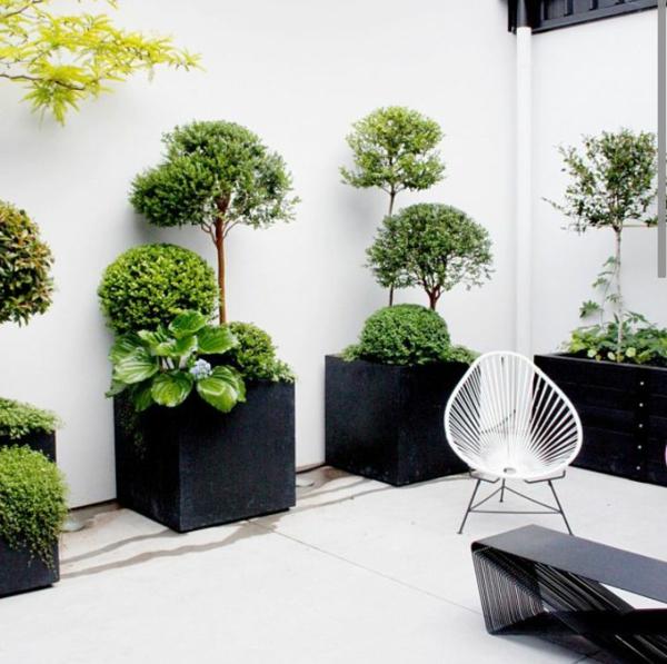 bildergalerie  schöne zimmerpflanzen zimmerbäume wintergarten