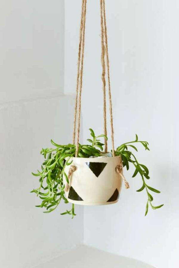 schöne-zimmerpflanzen-hängend-bilder-blumenampel