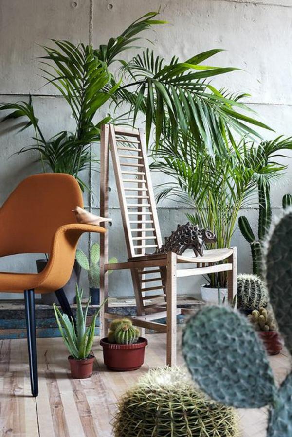 schöne zimmerpflanzen palmen bilder kaktus bestimmen