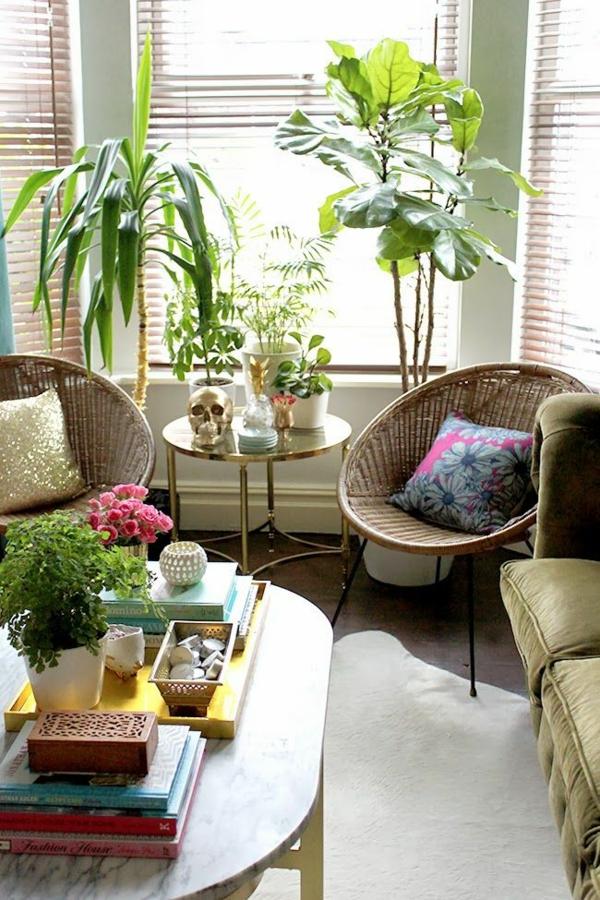 schöne zimmerpflanzen palmen bilder zimmergrünpflanzen