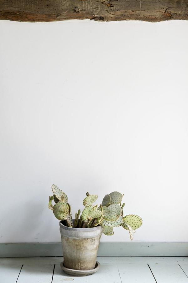 topfpflanzen pflegeleichte zimmerpflanzen bildergalerie