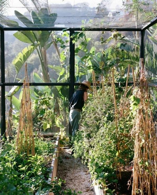 wintergarten bauen gemüse und bio produkte ganzjährig