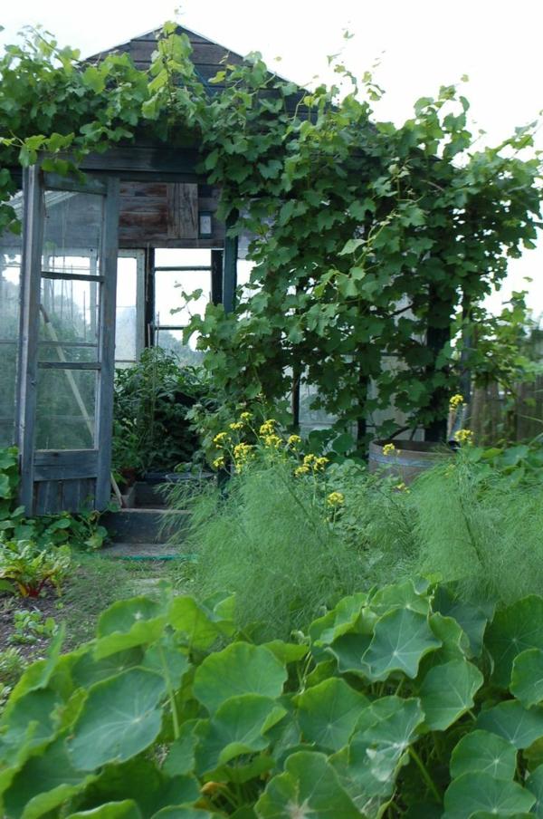 wintergarten bausatz gemüse und pflanzen holz gartenhäuschen