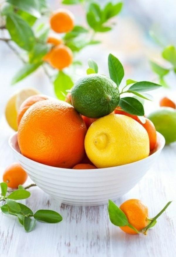 wintergarten pflanzen obst und gemüse zitronenbaum orangenbaum