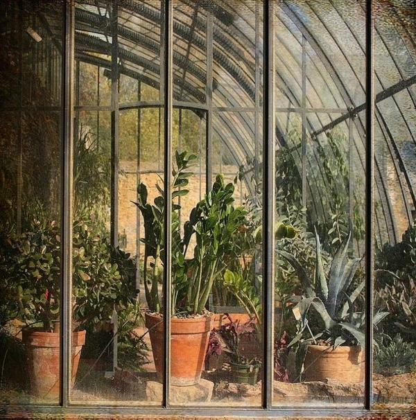 zimmergrünpflanzen glas wintergarten gestalten