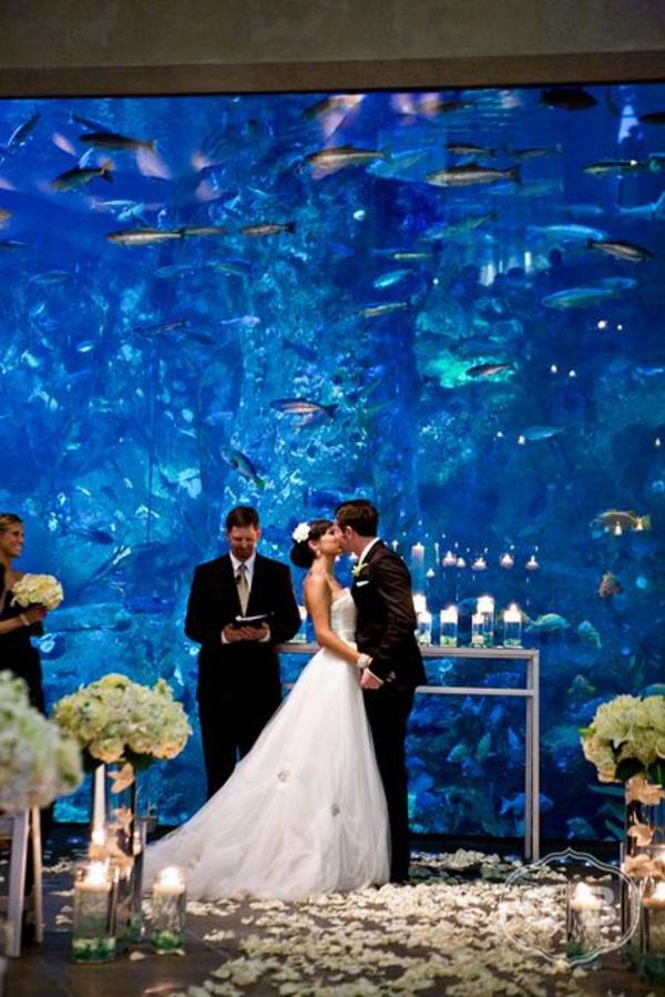 Brillante zierfische Aquarium Dekoration hochzeit