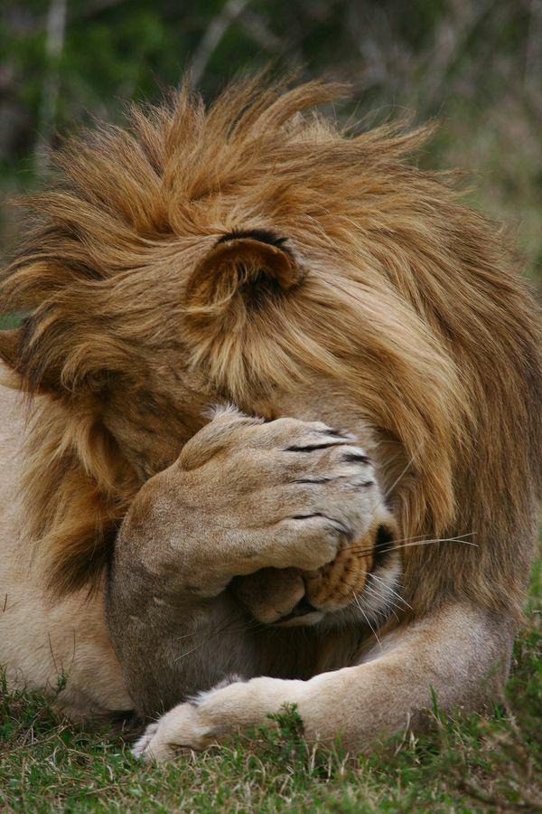 Horoskop Löwe jahreshoroskop 2015 schwierigkeiten