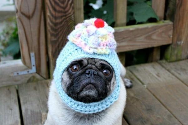 Mützen für Hunde hundebekleidung cupcakes