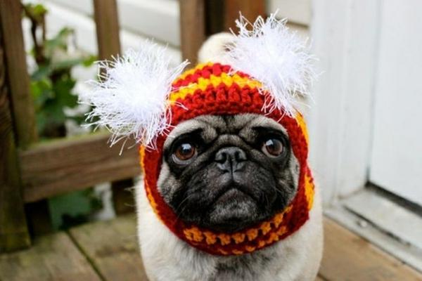 Mützen Hunde hundebekleidung deko