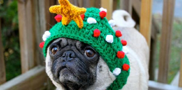 Mützen Hunde hundebekleidung festlich tannenbaum