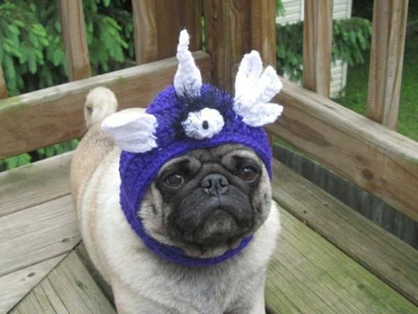 Mützen für Hunde hundebekleidung flügel