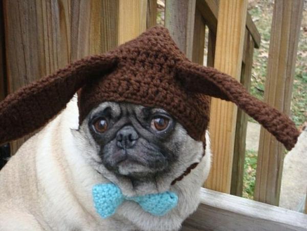 Mützen für Hunde hundebekleidung hase