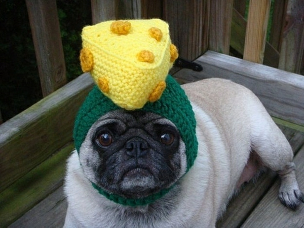 Mützen Hunde hundebekleidung käse