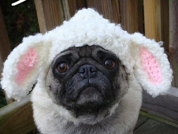 mütze Hunde hundebekleidung kanninchen