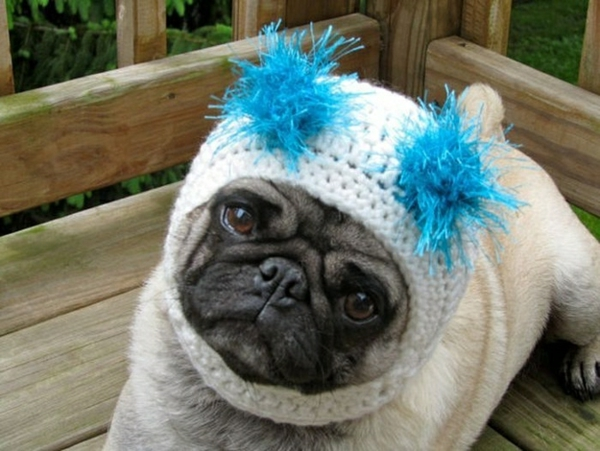 mützen Hunde hundebekleidung lustig