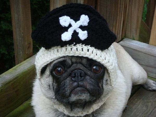 Mützen schwarz weiß Hunde hundebekleidung piraten