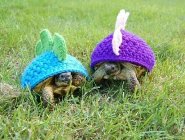 Mützen für Hunde hundebekleidung schildkröten
