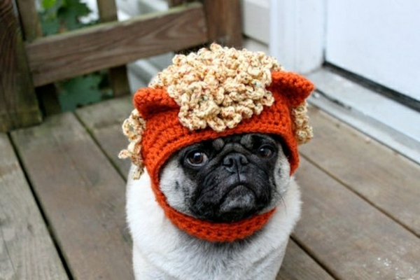 Mützen Hunde hundebekleidung welle