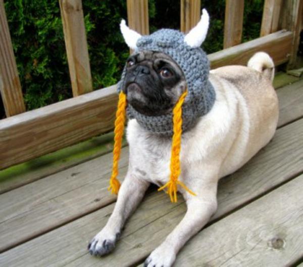 mode für Hunde hundebekleidung wikinger