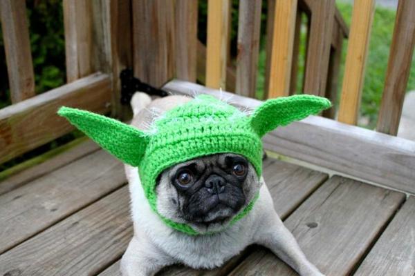 Mützen für Hunde hundebekleidung yoda