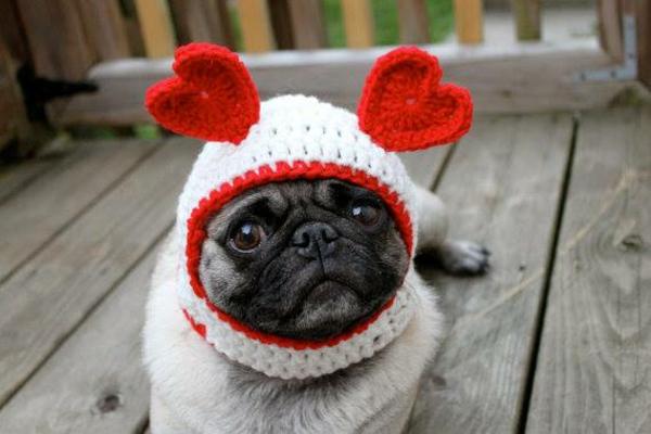 Mützen Hunde hundekleidung