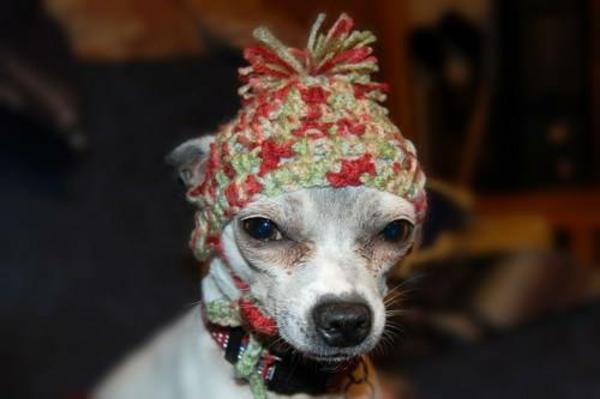 Mützen stricken bunt Hunde hundekleidung böse