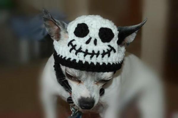 Mützen halloween kostüm Hunde hundekleidung gruselig
