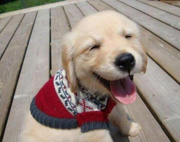 Mützen für Hunde hundekleidung- stricken