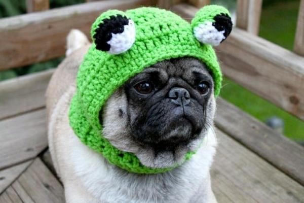 Hunde hundemode hundebekleidung frosch