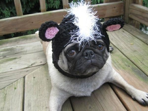 Mützen Hunde hundemode hundebekleidung mops ohren