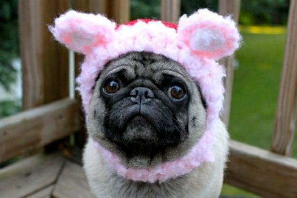 Hunde hundemode hundebekleidung mops rosa