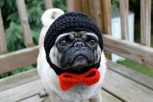 Mützen Hunde hundemode hundebekleidung mops schleife