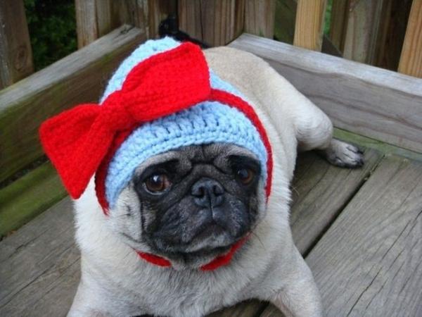 Mützen Hunde hundemode hundebekleidung mops weiblich