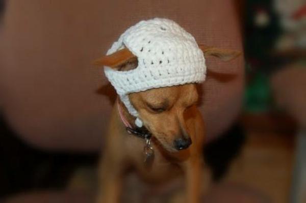Mützen Hunde hundemode weiß