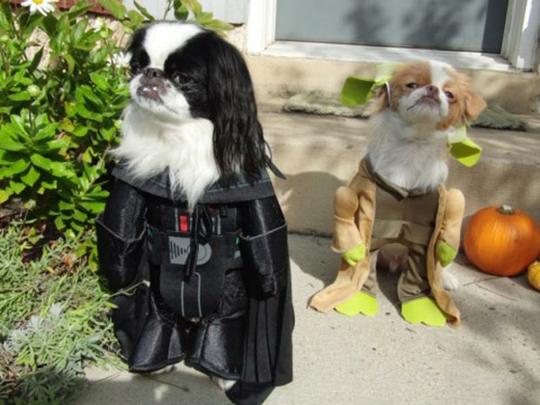 Star Wars für Hunde Darth Vader Yoda Ewok